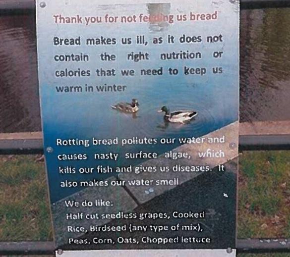bird feeding signjpg
